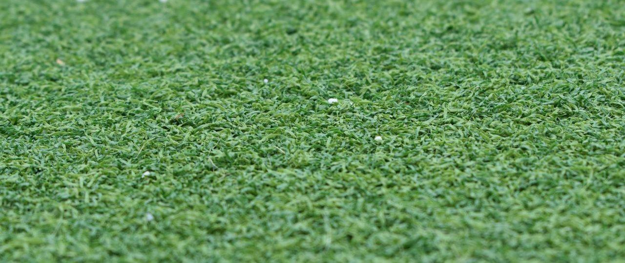 Green turf.